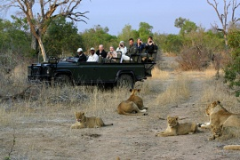 Wild Wings Safaris, George